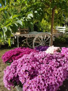fiori per allestire